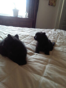 Two kittens for a loving home