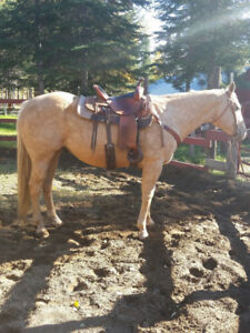 13 Year Gelding for Sale - Saddle included