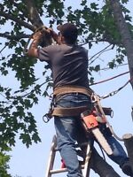 Tree removal fully insured
