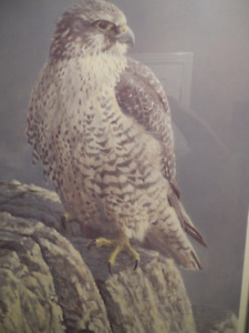 Robert Bateman Mountain Monarch Gyrfalcon Ltd Ed Print