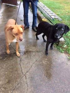 FOUND 2 dogs