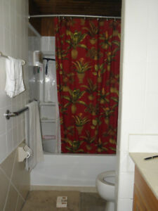 Fabric shower curtain, EUC