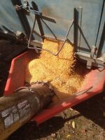 Feed Grain for sale