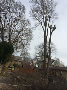 London Tree Cutting Services London Ontario image 5