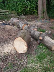 Need FREE  firewood ???  (Yarrow)