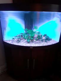 190lts juwel aquarium