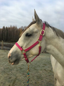 Stunning grey mare needs new home ASAP broodmare/Light riding.