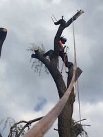 FULLY INSURED ARBORISTS SERVING BARRIE & AREA