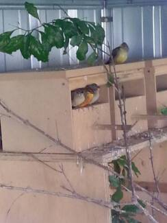 Finch aviary - breeding setup (birds included) Greenacre Bankstown Area Preview
