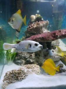 saltwater Fish and equipment.