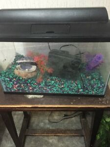 Perfect 10 gallon tank for anyone (sold)