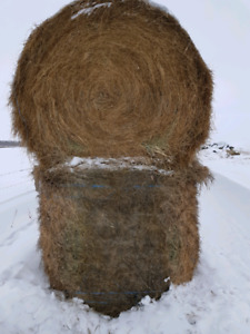 20 round bales for sale