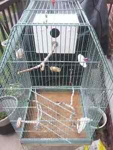 Grande cage d'oiseau - Big bird Cage