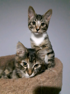 FREE 5 MONTH OLD KITTENS!!!!