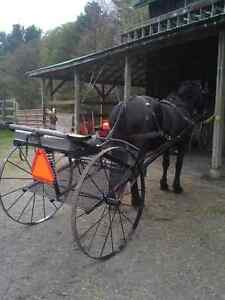 Horse Trailering - Other services Kawartha Lakes Peterborough Area image 2