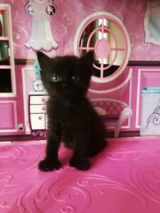 Beautiful Kittens are looking for a Loving & Caring Home