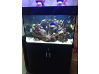 Black Aqua one 300 marine tropical fish tank aquarium (delivery/installation)