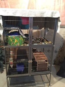 2 8month old Female Chinchillas with large double deck cage $500
