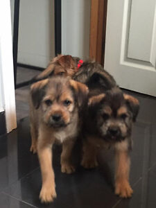 These Adorable Puppies available through PET SAVE  7056923319
