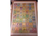 Pokemon cards 47 HOLOS