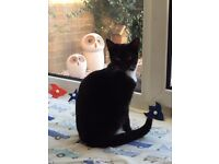 Beautiful 6mth old kitten- reluctantly free to good home!