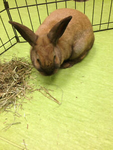 Rabbit found