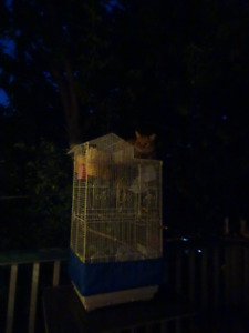 3 feet tall cage & 3 finches  1 female 2 males with eggs3 nests