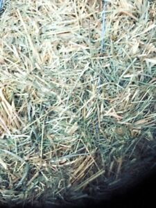 1st Cut Timothy Hay - small square bales