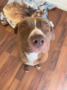 Jade is Looking for a Foster or Foster to Adopt Home!