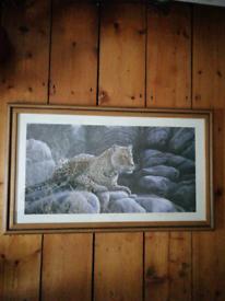 Leopard print picture