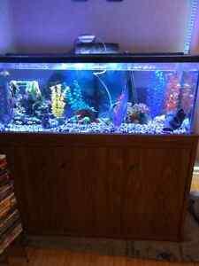 Fish,  90 gallon aquarium, and everything you need Kingston Kingston Area image 2