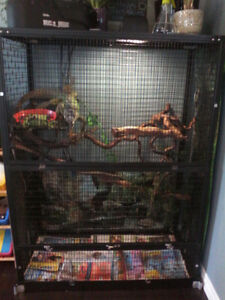 Male Iguana with cage and accessories