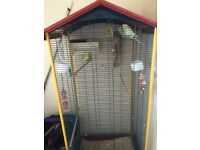 Budgerigars and cage for sale