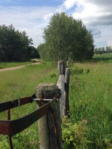 156.52 Acres of Farmland in Barrhead County