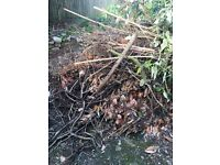 FREE ideal for bonfire night branches