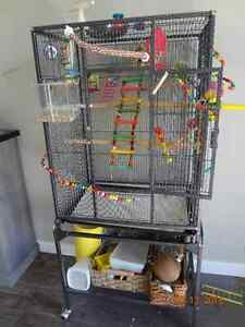 BUDGIE, CAGE,TOYS ETC