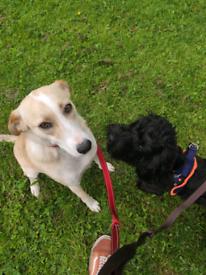 Dog walker in queen's park area