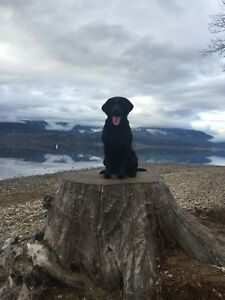 COUPLE + DOG LOOKING FOR A GREAT PLACE TO CALL HOME IN KELOWNA
