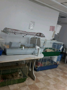 Rabbit breeding setup (Netherland dwarf)