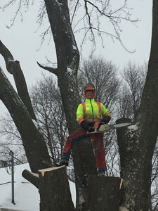 Tree Removal & Log Milling Kitchener / Waterloo Kitchener Area image 1