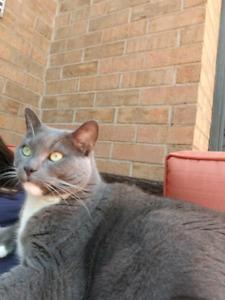 Gardienne de chats, pension