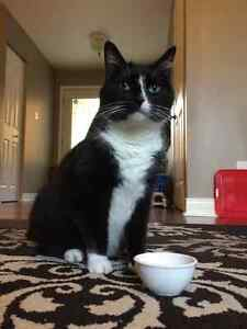 TUXEDO CAT LOOKING FOR NEW HOME