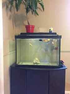 20g fish tank and stand everything include