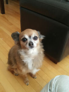Pet-friendly unit (small, quiet dog) for October or November