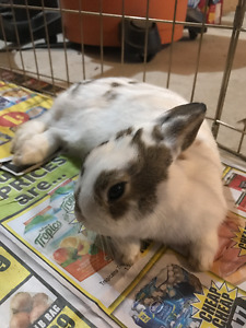 Bunny found in Harrowsmith area