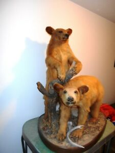 Taxidermy Bear Log Cabin House Hunting