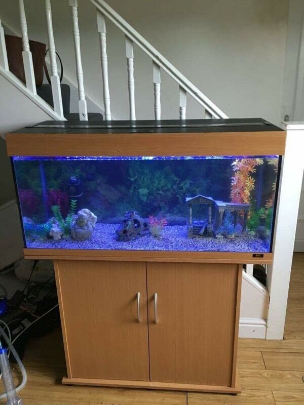 Juwel Rio 180L Tropical Fish Tank Setupin Morpeth, NorthumberlandGumtree - Juwel Rio 180L Tank and stand Comes with all of the be elow Juwel Rio 180L Tank Juwel Rio Fitted Stand LED Lights Internal Filter Decorative Background Gravel Decorations not included