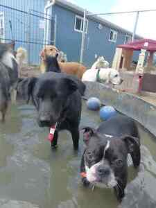 Pet Boarding and Daycare: Paws Claws N' Tails Moose Jaw Regina Area image 7