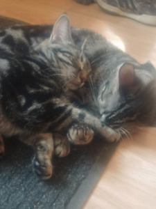 3 young felines in need of new home