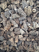 Top Quality Dried Morels